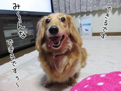 kinako5109.jpg