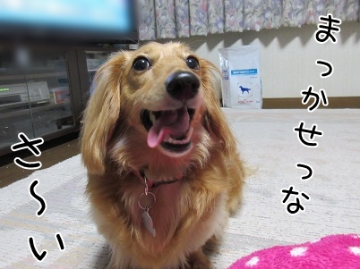 kinako5110.jpg