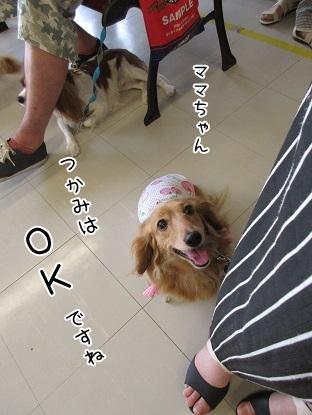 kinako5114.jpg