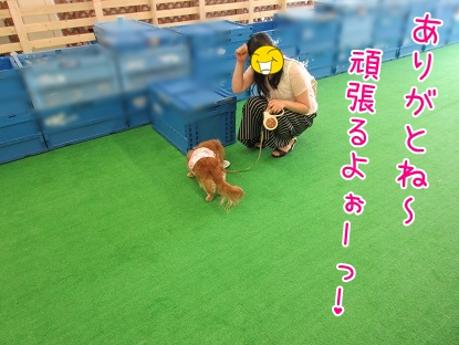 kinako5116.jpg
