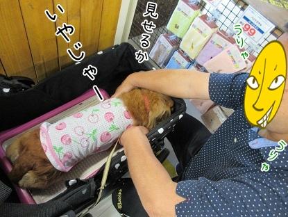 kinako5127.jpg
