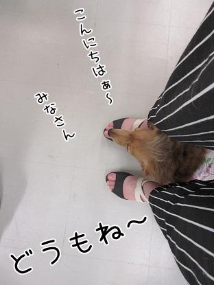kinako5130.jpg
