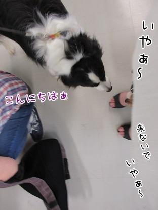 kinako5131.jpg