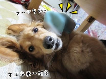 kinako5132.jpg