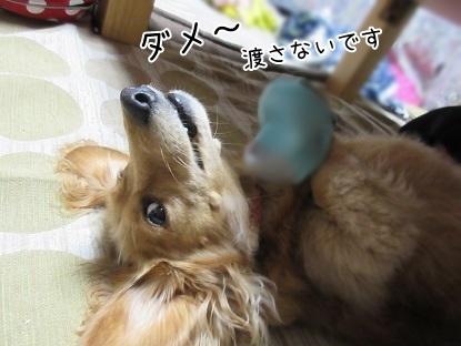 kinako5134.jpg