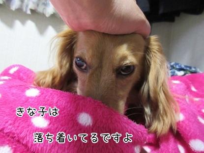 kinako5149.jpg