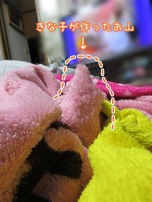 kinako5153.jpg