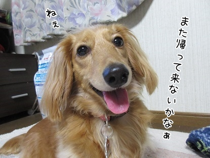 kinako5162.jpg
