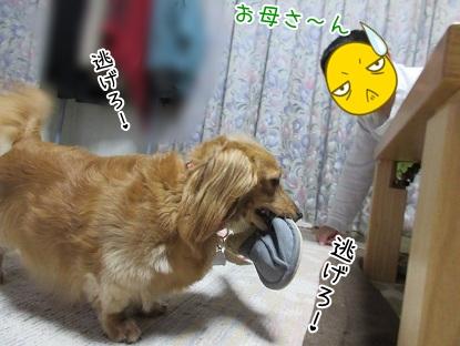 kinako5168.jpg