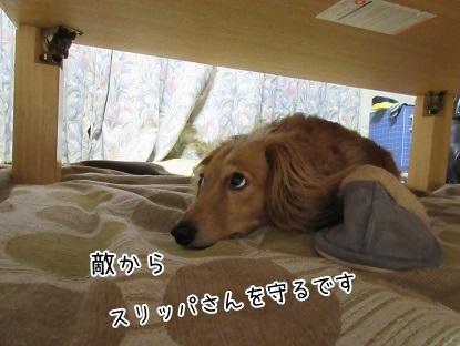 kinako5169.jpg