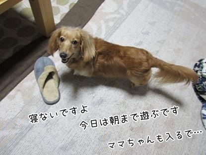 kinako5170.jpg