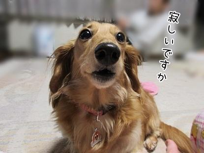 kinako5174.jpg