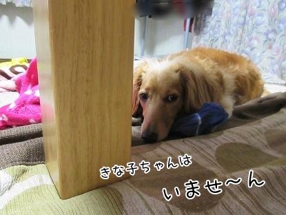 kinako5195.jpg