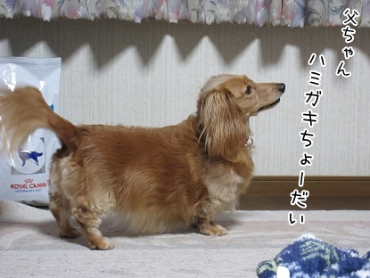 kinako5196.jpg