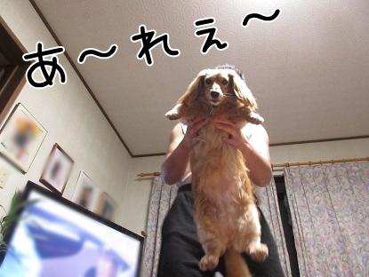 kinako5198.jpg