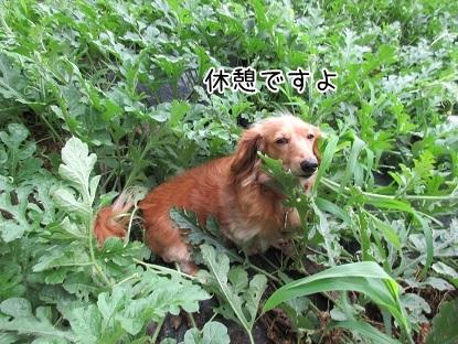kinako5210.jpg