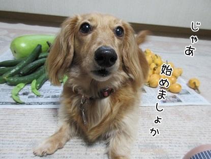 kinako5217.jpg