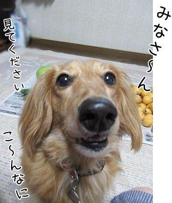 kinako5222.jpg