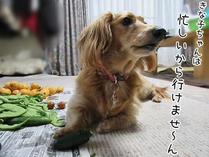kinako5227.jpg