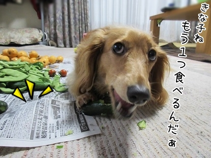 kinako5229.jpg