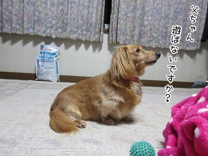 kinako5232.jpg