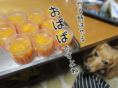 kinako5248.jpg