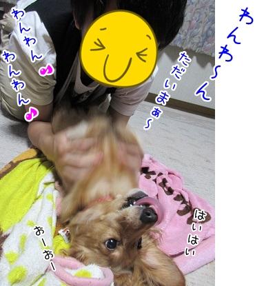kinako5254.jpg