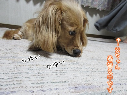 kinako5264.jpg