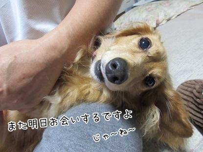 kinako5268.jpg