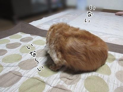 kinako5274.jpg