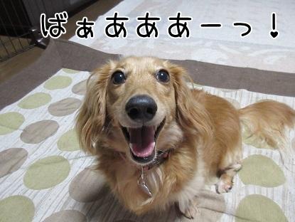 kinako5275.jpg