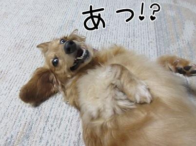 kinako5281.jpg