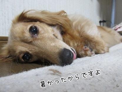 kinako5286.jpg