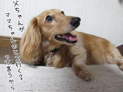 kinako5287.jpg