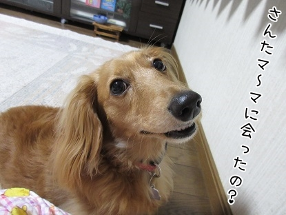 kinako5300.jpg