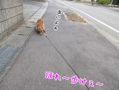 kinako5307.jpg
