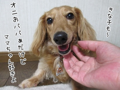 kinako5312.jpg