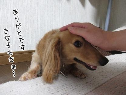 kinako5315.jpg