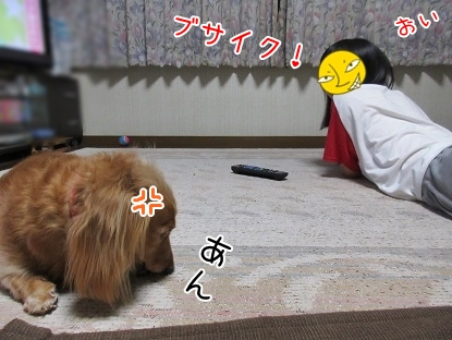 kinako5317.jpg