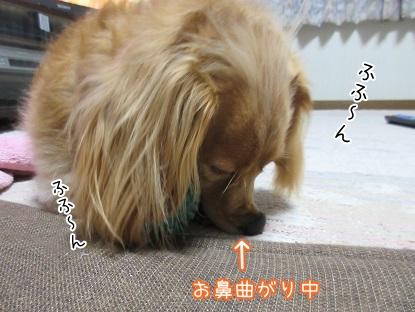kinako5318.jpg