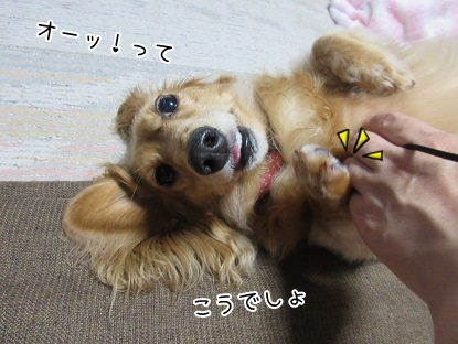 kinako5330.jpg