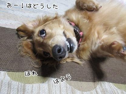 kinako5334.jpg
