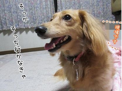 kinako5345.jpg