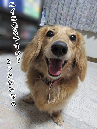 kinako5346.jpg