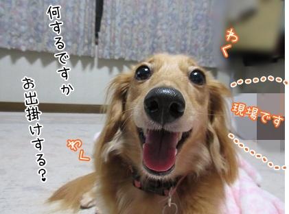 kinako5347.jpg