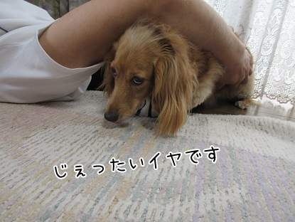 kinako5364.jpg