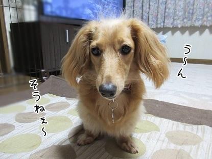 kinako5378.jpg