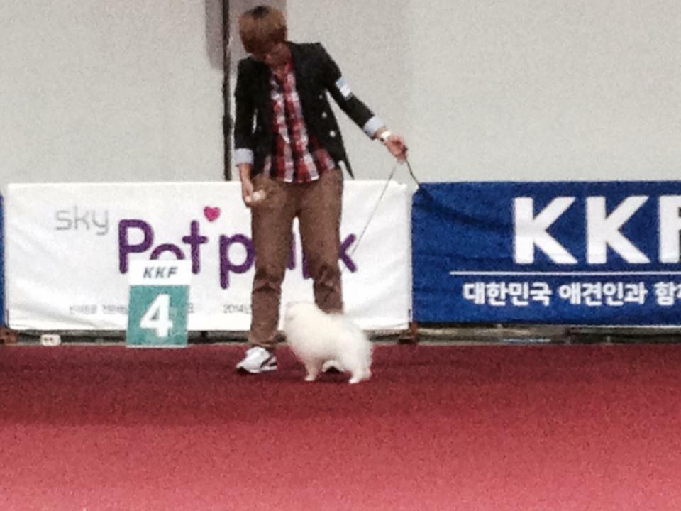 韓国ドッグショー