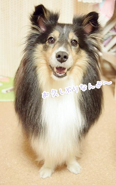 DSC_0068_201607202241200f9.jpg