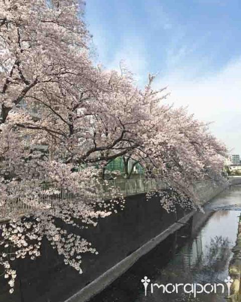 160406 お花見散歩-1